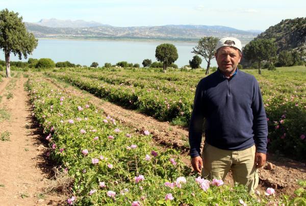 Gül Bahçeleri Sayesinde 5 Milyon Ton Su Tasarrufu Sağlandı