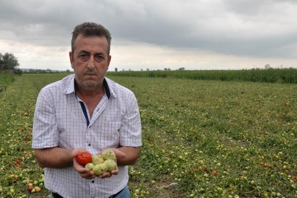 Bursa'da Dolu ve Sağanak Ekili Alanlara Zarar Verdi