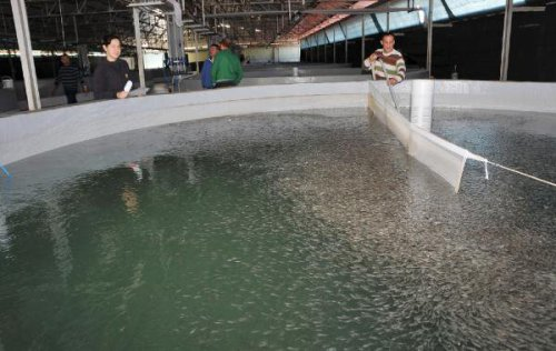 Bu Enstitü 15 Milyon Yavru Balık Üretecek