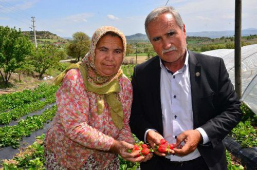 Çilek Üretimi, Bir İlçenin Kaderini Değiştirdi